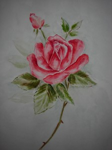 Watercolor Rose Study