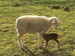 Buckwheat and Marcy