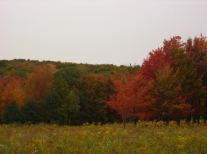 What a glorious color palette!!  The back field/tree line