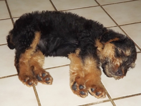 She loves to sleep on the tiled kitchen floor